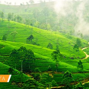 sri-lanka-tailor-made-tours-NUWARA-ELIYA