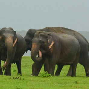 sri-lanka-holiday-tours-Wilpattu
