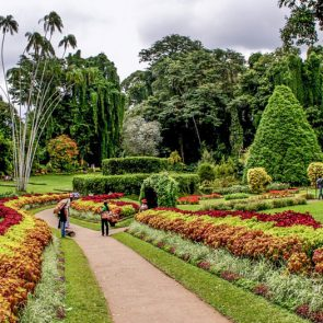 tours-to-sri-lanka-Peradeniya