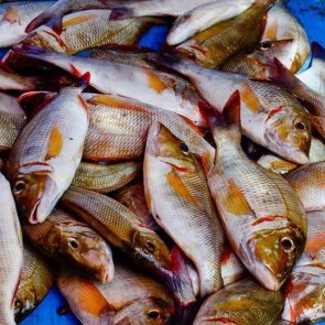 private-tours-to-sri-lanka-Negombo-img-04