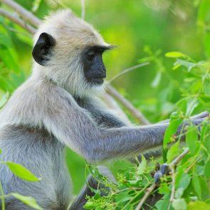 sri-lanka-holiday-tours-Udawalawe-02