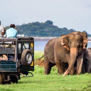 sri-lanka-holiday-tours-Udawalawe-06